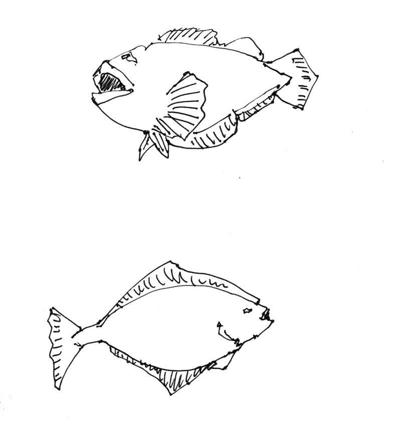 AlaskaFishCleanLR