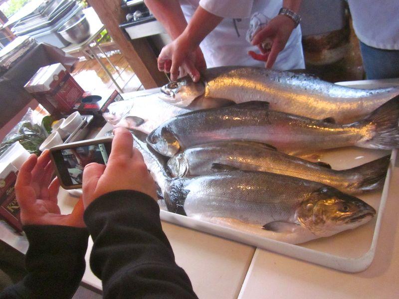 Alaska_Salmon_Camera
