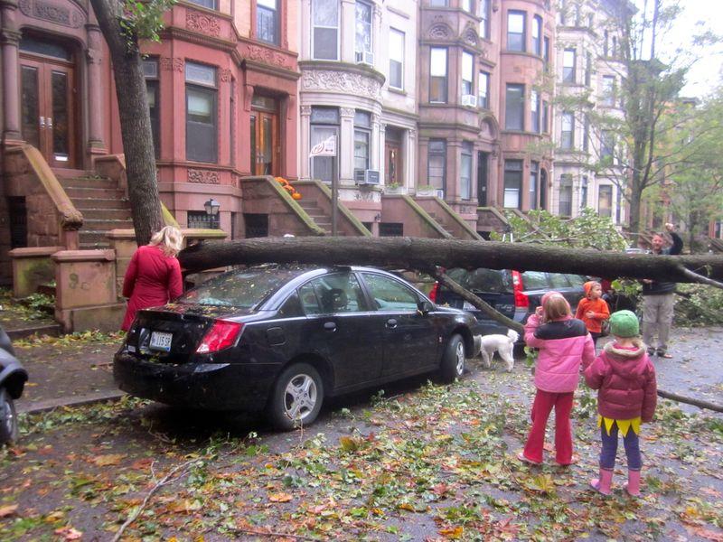 Hurricane_tree