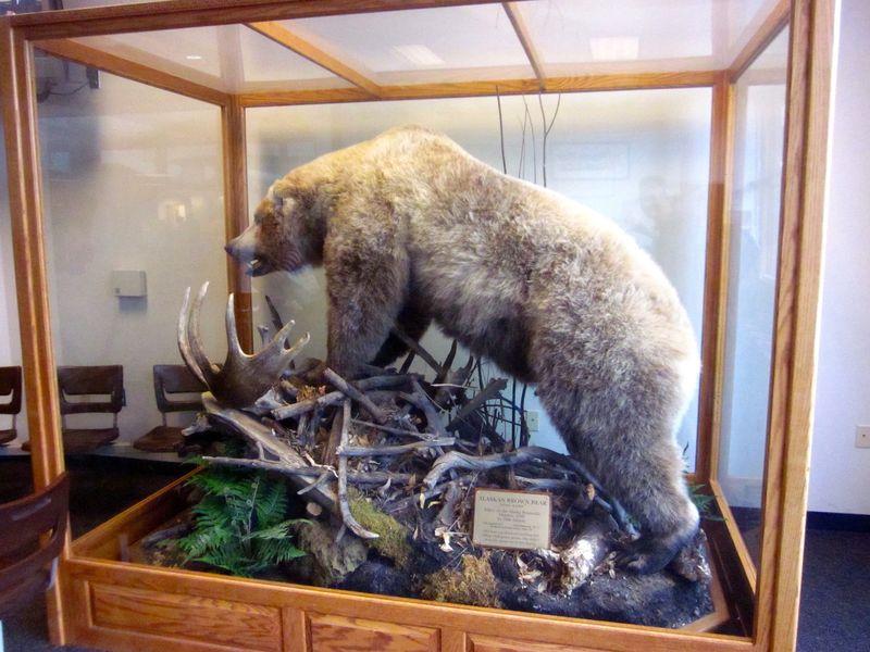 Alaska_Airport_Bear